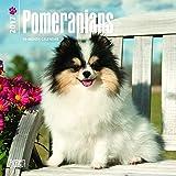 Pomeranians 2017 Mini 7x7 (Multilingual Edition)