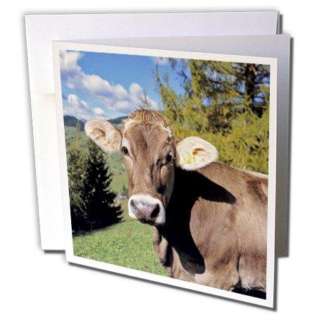 3dRose Italia, dolomita Alpes, suiza vaca café–EU16RER0140–Ric Ergenbright–Tarjetas de felicitación,...