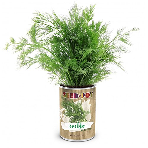 Kit de Cultivo SeedPOT: Cultivar Eneldo EcoHortum