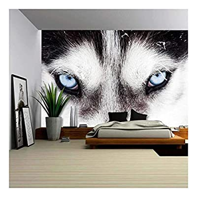 Close Up on Blue Eyes of a Husky Dog - Removable Wall Mural | Self-Adhesive Large Wallpaper - 66x96 inches