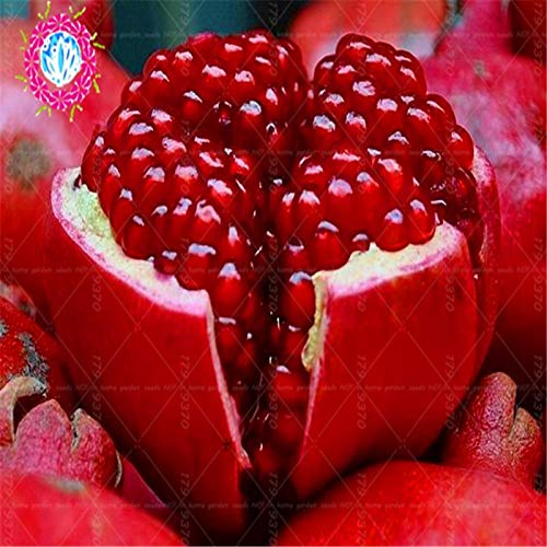 50 Pcs/Bag Rare Black Pomegranate Bonsai Pomegranate Tree Delicious Fruit for Home Indoor Or Outdoor Potted Plants