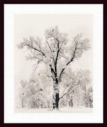 Printfinders 12230s61 blk cw wtw printfinders oak tree by for Cheap framed art prints