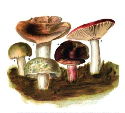 57 Old Books Mushrooms Hunting Field Identification Edible Fungus Poisonous on DVD