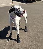 Walkaboots Pet Boots Medium