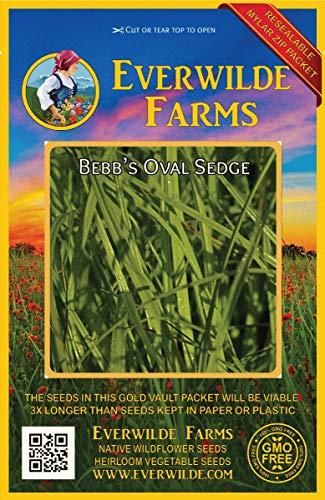 Everwilde Farms - 1000 Bebb's Oval Sedge Native Grass Seeds - Gold Vault Jumbo Seed Packet ()