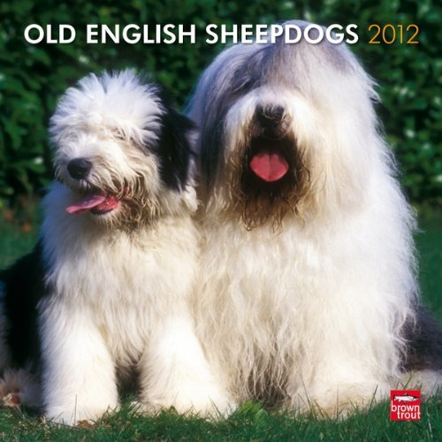 Sheepdog 2011 Calendar - Old English Sheepdogs 2012 Square 12X12 Wall Calendar (Multilingual Edition) by BrownTrout Publishers Inc (2011-07-15)