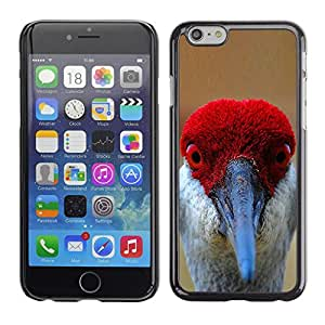 A-type Arte & diseño plástico duro Fundas Cover Cubre Hard Case Cover para Apple (5.5 inches!!!) iPhone 6+ Plus / 6S+ Plus (Funny Red Bird Beak Eyes Tropical Feather)