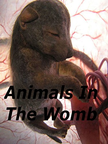 (Animals In The Womb)