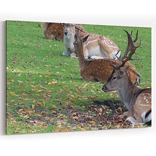 Lots of Wild Deer Laying Down On The Field Scene in Autumn Season Canvas Art Wall