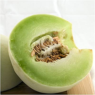 Package of 100 Seeds, Green Honeydew Melon (Cucumis melo) Non-GMO Seeds by Seed Needs