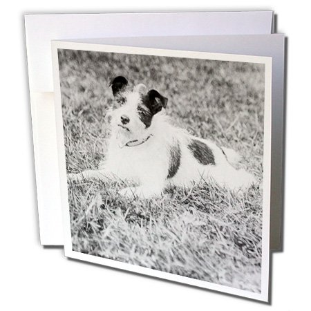 Scenes from the Past Magic Lantern - Vintage Terrier Called Terry Jack Russell Terrier Puppy Mix Circa 1910 - 1 Greeting Card with envelope (gc_246046_5) (Terrier Mix Puppy)