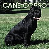 Cane Corso 2005 Calendar