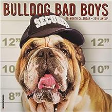 Bulldog Bad Boys 2019 Wall Calendar (Dog Breed Calendar)
