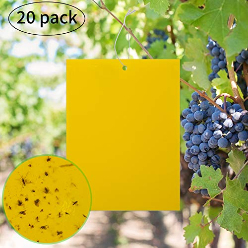 LUTER 20-Pack Dual-Sided Yellow Sticky Traps for Flying Plant Insect Like Fungus Gnats, Flying Aphid, Whiteflies, Leaf Miners, Other Flying Plant Insects (6X8 Inches, 20pcs Twist Ties ()