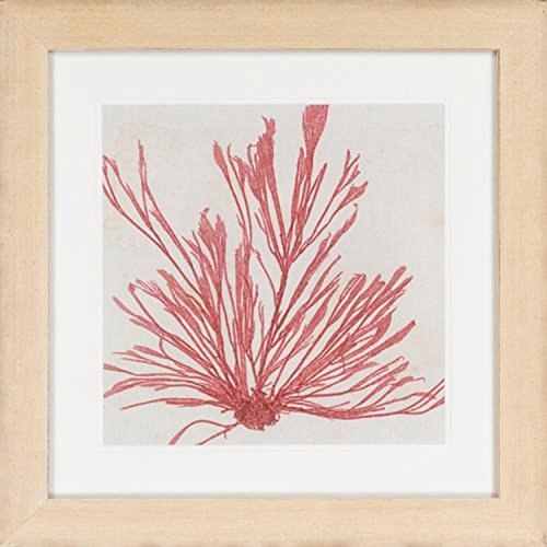 "Diva At Home 24"" x 24"" Framed Rouge Pink Brilliant Seaweed Wall Art ()"