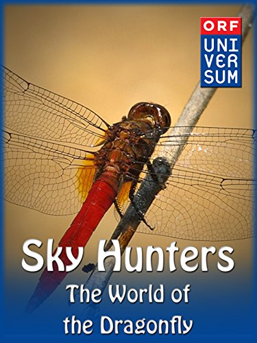 (Sky Hunters - The World of the Dragonfly )