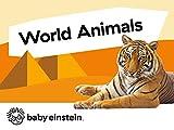 world animals baby einstein - World Animals