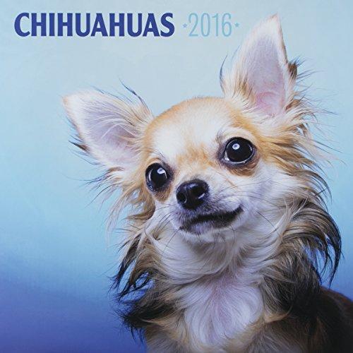 "DaySpring 12"" x 12"" 2016 12-Month Wall Calendar, Chihuahuas (74312)"