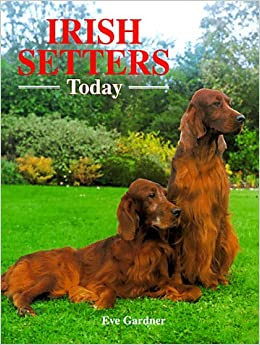 Book Irish Setters Today