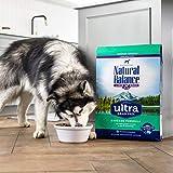 Natural Balance Original Ultra Grain Free Large