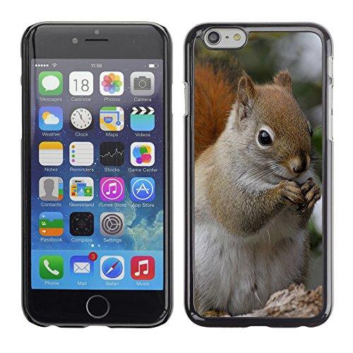 """Premio Sottile Slim Cassa Custodia Case Cover Shell // F00029818 écureuil Manger // Apple iPhone 6 6S 6G PLUS 5.5"""""""