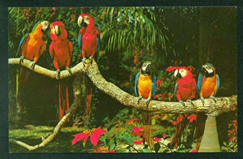 Parrot Jungle Park Macaws Birds Miami Florida Vintage FL Postcard ()