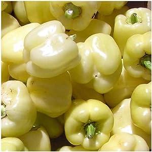David's Garden Seeds Pepper Bell White (White) 25 Non-GMO, Heirloom Seeds