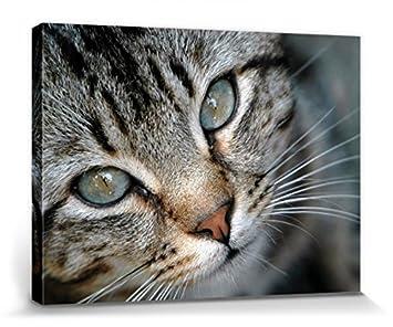 1art1® Gatos - Pequeño Gato Tigrado Cuadro, Lienzo Montado sobre Bastidor (40 x 30cm): Amazon.es: Hogar
