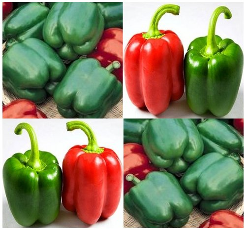 80 YOLO WONDER Pepper seeds HIGH YIELD ~ Top quality sweet bell blocky & 4 lobed