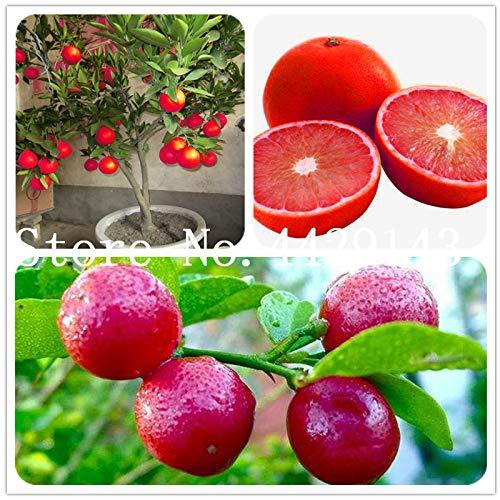 (IDEA HIGH Seeds-20 pcs/Bag Kaffir Lime Plants Lime Plants (Citrus Aurantifolia) Organic Fruit Plants Bonsai Fruit Lemon Tree for Home)