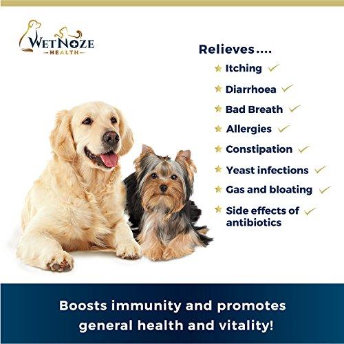 Dog Food That Prevents Diarrhea