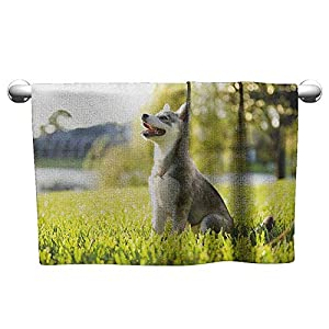 Andasrew Cute Hand Towels Alaskan Malamute,Klee Kai Puppy Sitting on Grass Looking Up Friendly Young Cute Animal, Multicolor,Hooded Beach Towel for Girls 28