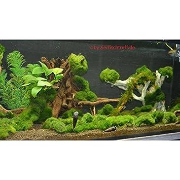Unterwasserrasen Unterwassergras Algenkiller Sauerstoffproduzent