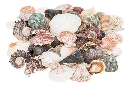 NaDeco Muschelmix ca. 500g | Deko Muscheln | Deko Schnecken | maritime Dekoration