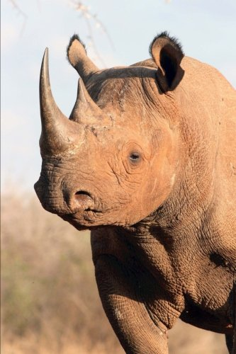 Black Rhinoceros Animal Journal: 150 Page Lined Notebook/Diary ()