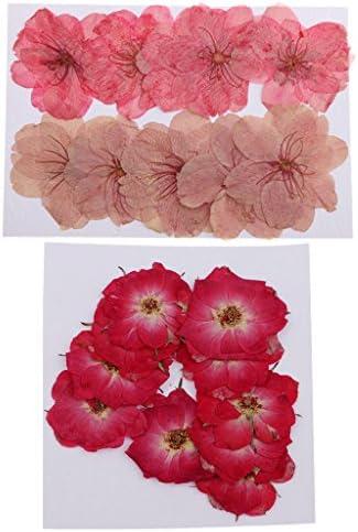 Hellery ドライフラワー 押し花 乾燥花 桜の花 バラの花 ハンドメイド 手作り アルバムフレーム 20枚入り
