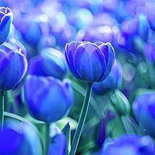 super1798 3Pcs Variety Tulip Bulbs Seeds Flower Home Garden Plant Decoration - 3pcs Pure Blue Tulip Bulbs Seeds