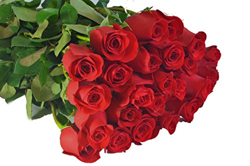 Farm2Door Valentine's Day Collection: 12 Fresh Red Roses (Long Stemmed - 50cm) from Colombia - Farm Direct Wholesale Fresh Flowers
