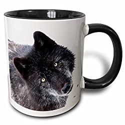 3dRose 173728_4 Rocky Mountain Gray Wolf Two Tone Mug 11 oz Black