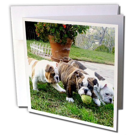Bulldog Birthday (3dRose English Bulldogs Play Ball - Greeting Cards, 6 x 6 inches, set of 12 (gc_60013_2))