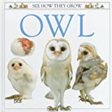 Owl, Mary Ling, 1564581152