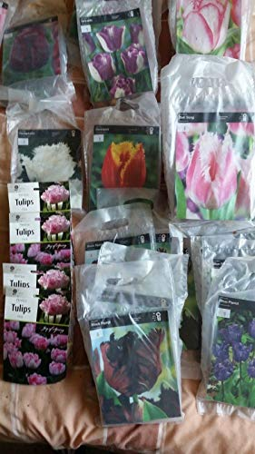 Casavidas Seeds Package: Bell Song: Tulip Bulbs, Pre Packs, Parrot Fringed Triumph and Double Tulips