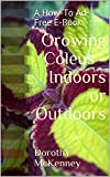 Growing Coleus - Indoors or Outdoors: A