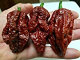 Chocolate Bhutlah Hot Pepper 10+ Seeds