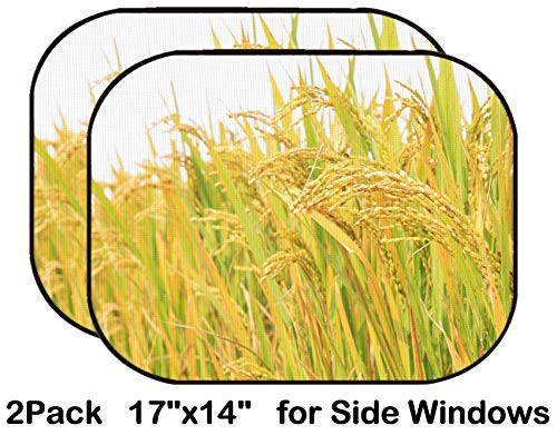 Liili Car Sun Shade for Side Rear Window Blocks UV Ray Sunlight Heat - Protect Baby and Pet - 2 Pack Image ID: 24704504 Harvest of Rice Grain in Rural in Autumn North China