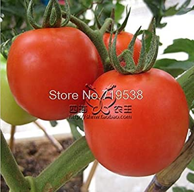 Fruit Red Tomato 50 Pcs Vegetable Seeds