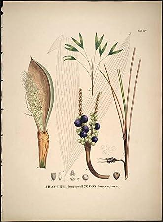 HISTORIA NATURALIS PALMARUM EBOOK DOWNLOAD