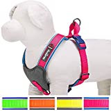 """Blueberry Pet Soft & Comfy Summer Hope 3M Reflective Padded Dog Harness Vest, Chest Girth 24"""" - 29.5"""", Neck 20.5"""", Fluorescent Pink, M/L, No Pull Harnesses for Dogs"""