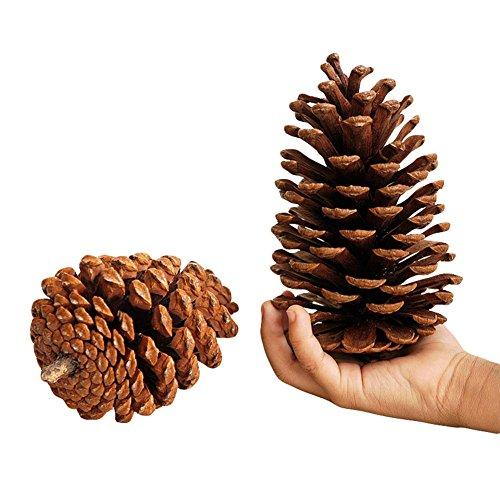 Qingsun Big Premium Tabletop Natural Large Christmas Pine Cones for Holiday Decor Crafts