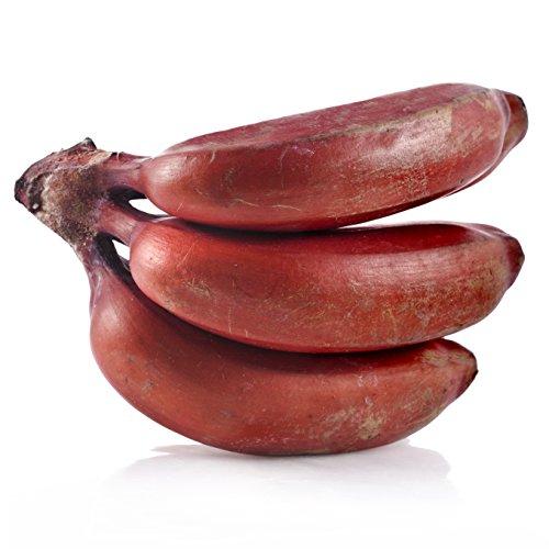 Musa Dwarf Red Banana Fruit Tree Live Plant Tropical garden